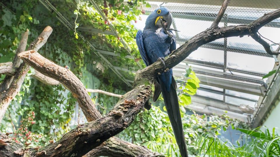 Фото: David Kraus,  archiv Zoo Praha