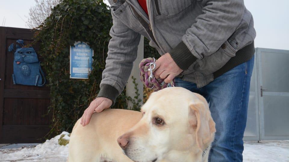Лабрадор с онкологическим диагнозом,  Фото: Эва Туречкова,  Чешское радио - Радио Прага