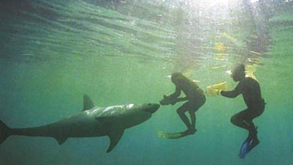 Фото: www.lichtag.com,  Рихард Яронек,  Стив Лихтаг
