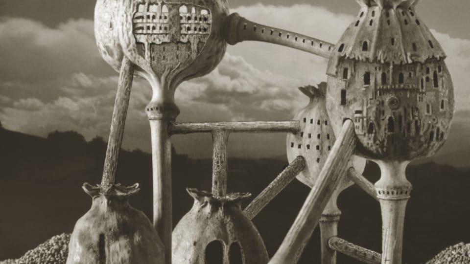 «Долгий путь маленького человека»,  фото: Архив Иваны Пехачковой