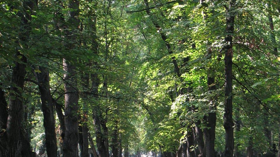 Ольшанское кладбище  (Фото: Штепанка Будкова)