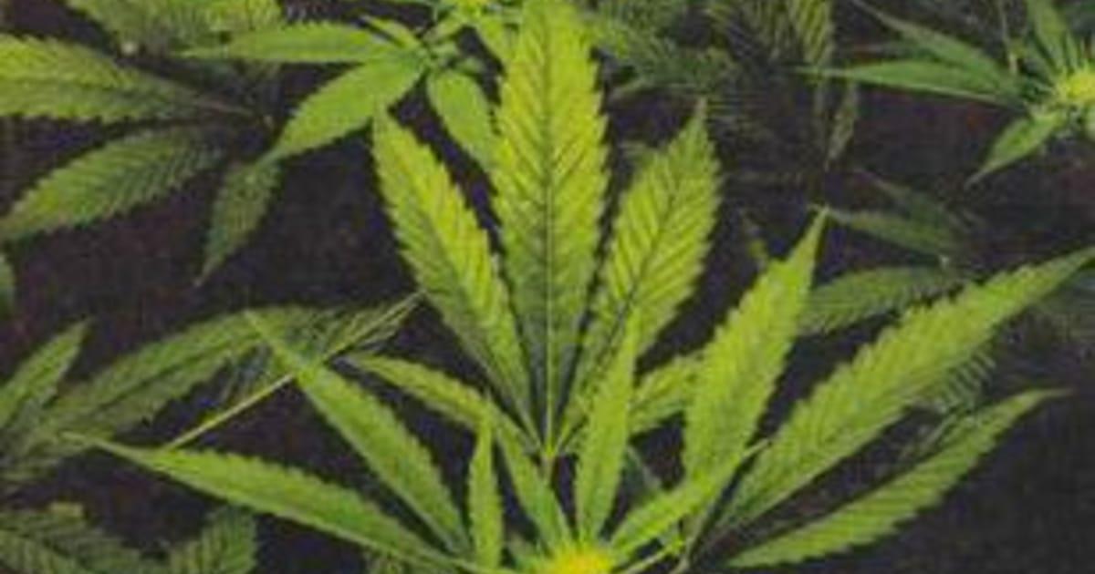 Какая статья за хранение марихуаны марихуана и боб марли