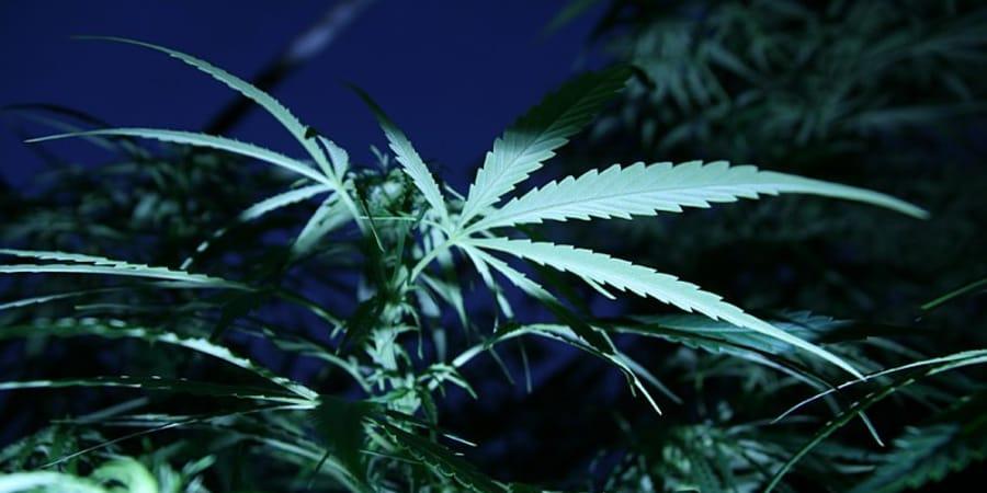 Конопля самые смешные я поддерживаю марихуану